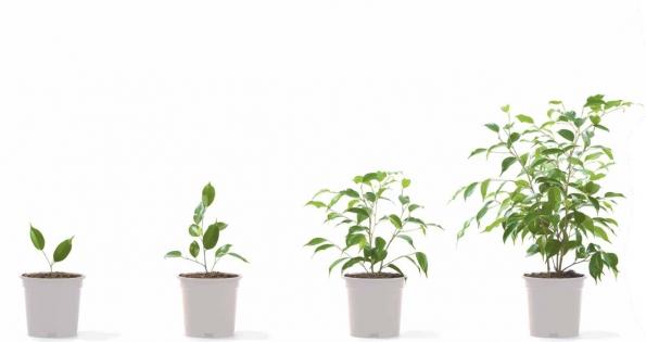 Ayala Environmental Sustainability